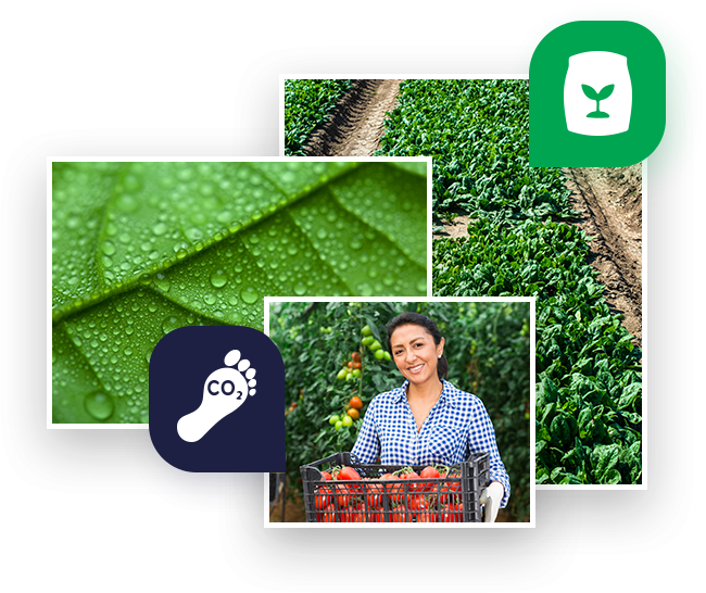 foliar application and field